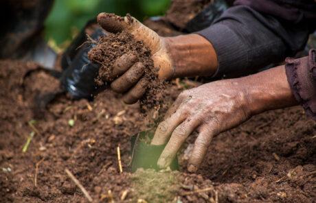 Photo d'une main remuant la terre